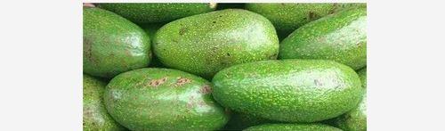Green Color Frozen Avocado