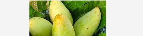 Fresh Sweet Yellow Mango