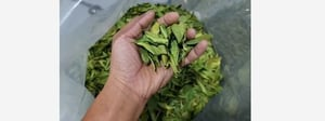 Green Dried Lime Leaves