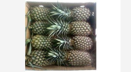 Organic Fresh Pineapple Fruit
