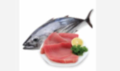 Frozen Fish Fillets for Meat
