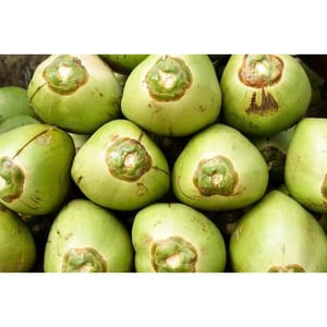 Mouthwatering Green Tender Coconuts