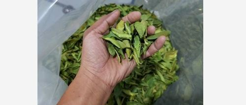 Natural Dried Lemon Leaves