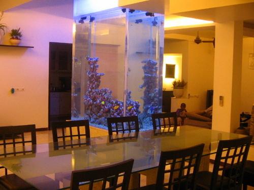 Slim Wall Mounted See Through Aquarium Design