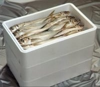Thermocole Fish Boxes