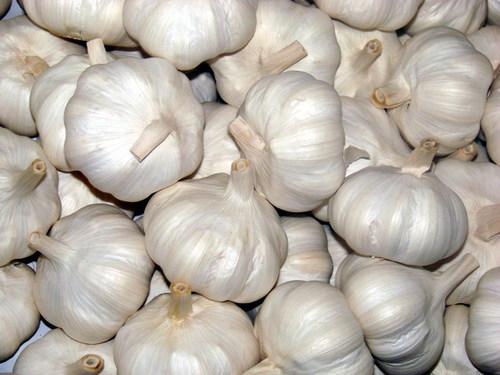 New Fresh Garlic