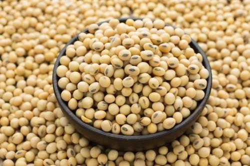 Grade A Organic Soybean Seeds