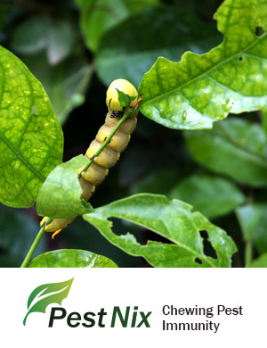 Pest Nix Organic Pesticides Certifications: Npop