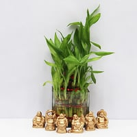 Lucky Bamboo With Set Of 6 Laughing Buddha