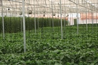 Commercial Hydroponics System
