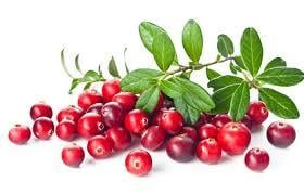 Natural Cranberry Plant Extract