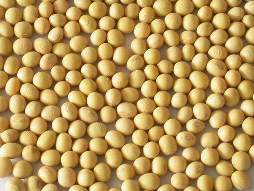 Fresh Soybeans