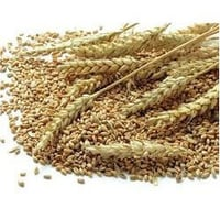 Wheat Feed Grains