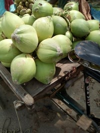 Fresh Green Coconuts