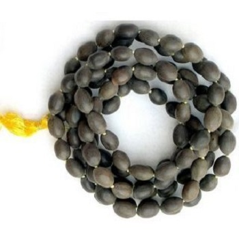 High Grade Black Lotus Seed
