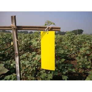 Agricultural Yellow Sticky Trap