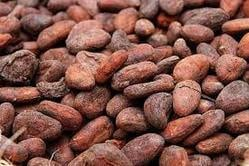 Highly Demanded Cocoa Beans
