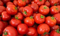 Fresh Red Tomato Extract