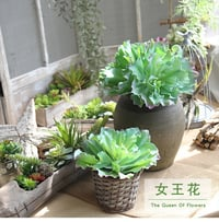 Artificial Succulent Plants (Green Color)