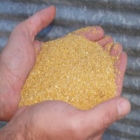 Dried Corn Distillers Grain
