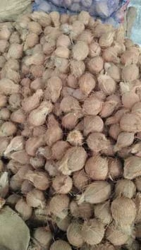 Best Quality Dry Coconut