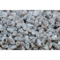High Quality Cotton Seeds