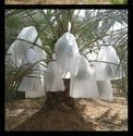 Banana Crop Protection Cover