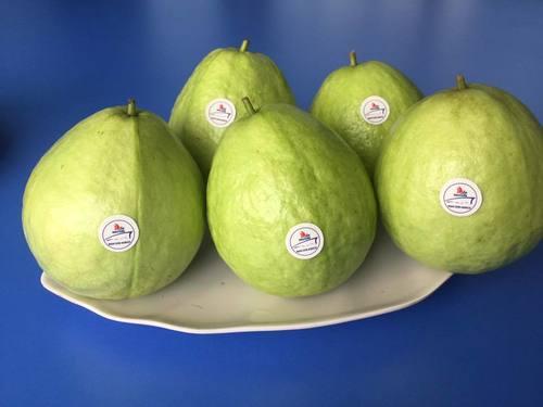 Natural Farm Fresh Guava