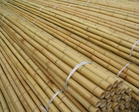 Bamboo Poles To Fence