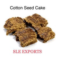 Excellent Quality Cotton Seed Meal