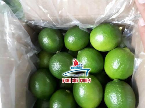 Fresh Seedless Lime/Lemon With High Quality