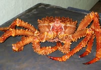 Fresh Frozen Alaska Crab