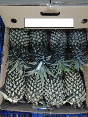 Special Taste Fresh Pineapple