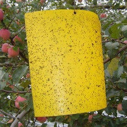 Yellow Sticky Trap Paper