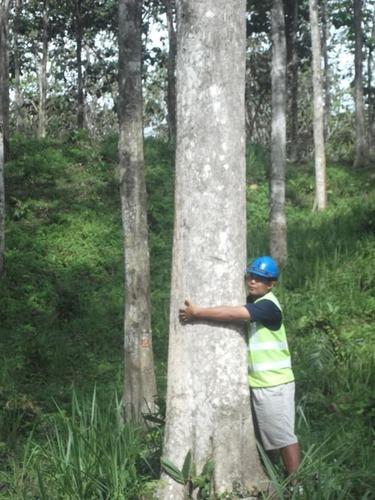 High Quality Teak Logs