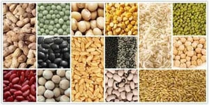 Export Quality Pure Soyabean