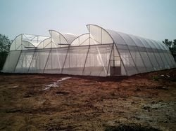 Durable Natural Ventilated Polyhouse