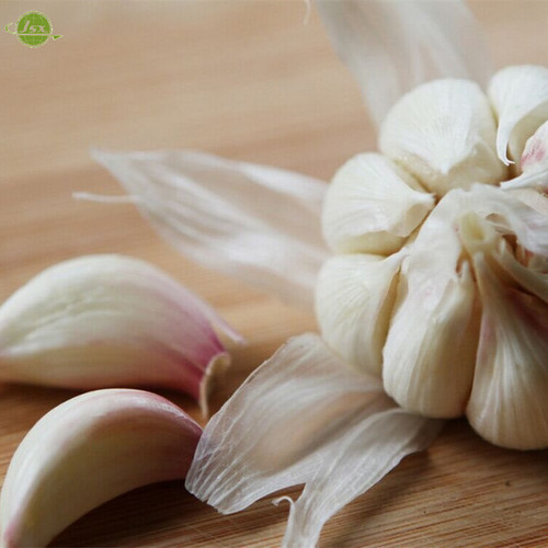 Pure Fresh White Garlic