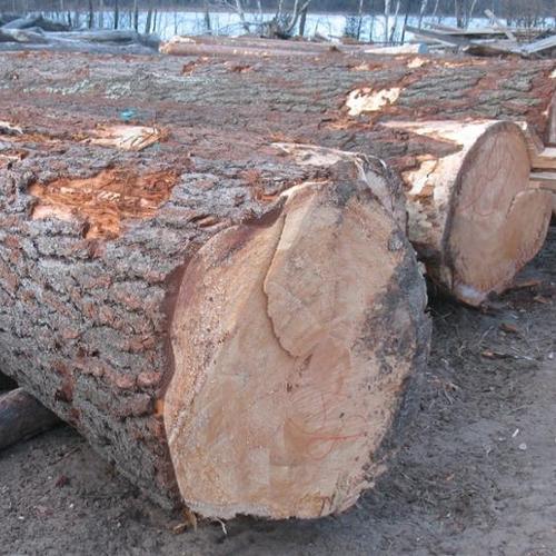 Timber Cedar Timber