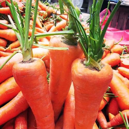 Naturally Cultivated Fresh Carrot
