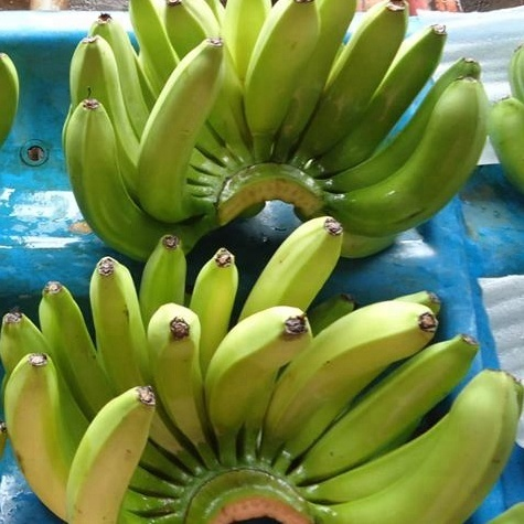 Impurity Free Cavendish Bananas