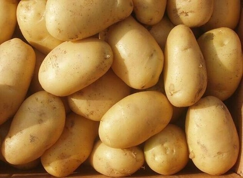Highly Fresh Agricultural Potatoes