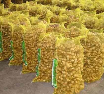 Organic Pure Fresh Ginger