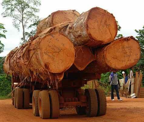 High Strength Timber Logs
