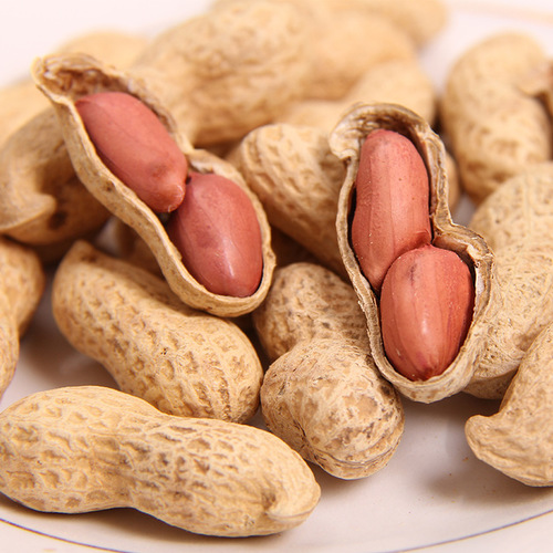 High Quality Ground Nut