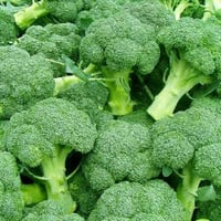 Highly Nutritional Green Broccoli