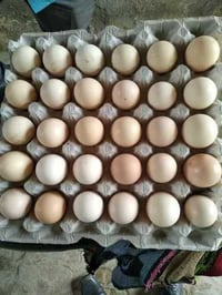 Black Kadaknath Chicken Eggs
