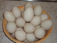 High Protein Duck Eggs