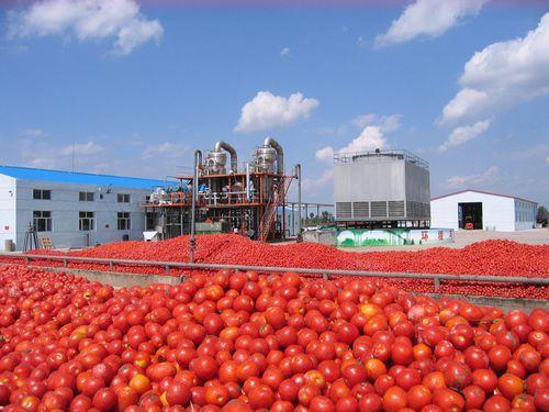 High Grade Tomato Paste