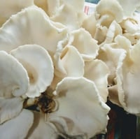 Dry and Fresh Oyster Mushroom